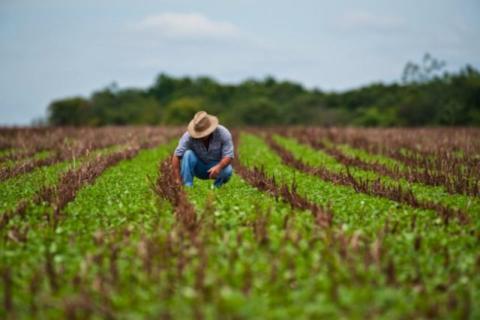 Agronegócio e o lucro comprovado da preservação ambiental