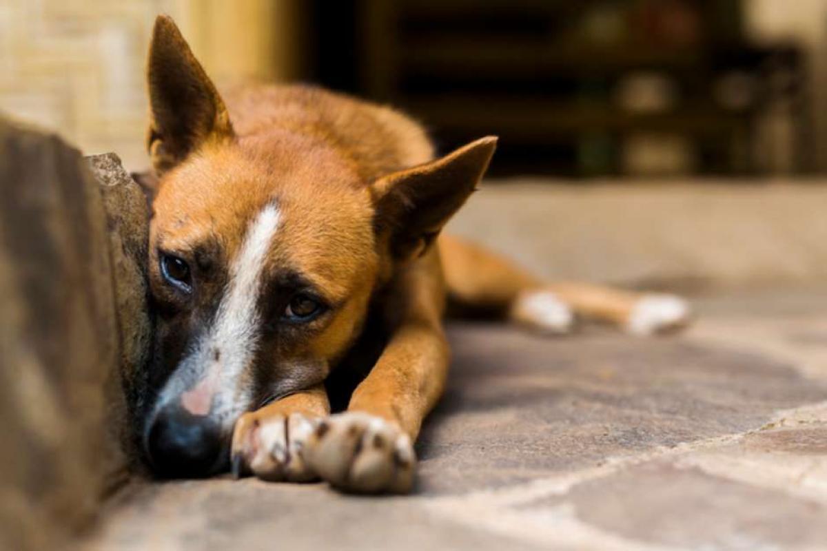 Abandono, agressão e condições insalubres são considerados crimes. Foto: iStock