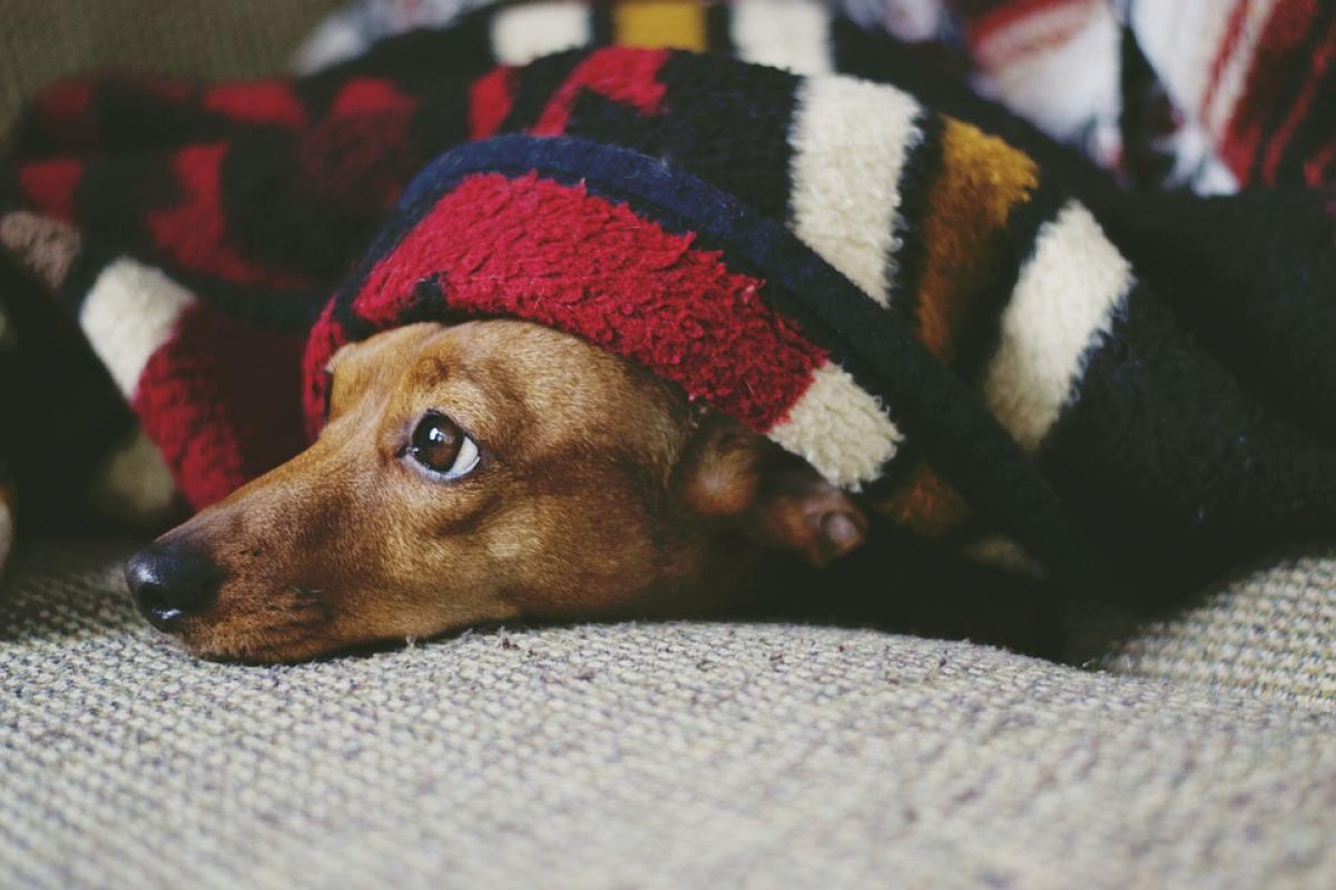 Faça o seu pet gostar do novo espaço. Foto: Pixabay