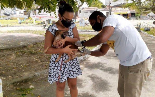Campanha de Vacinação Antirrábica já imunizou mais de 36 mil animais