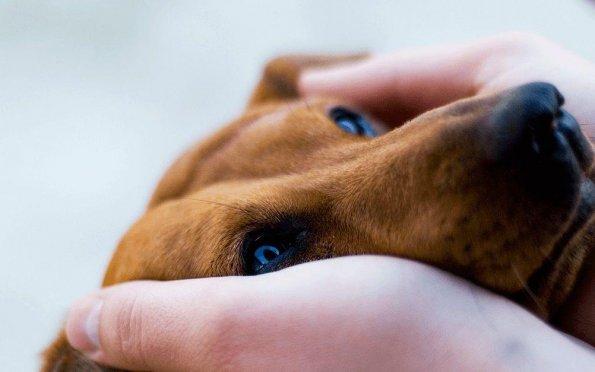 Conheça propostas sobre a causa animal de candidatos à Câmara de Aracaju
