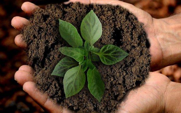 Teoria dos 5 Rs da Sustentabilidade