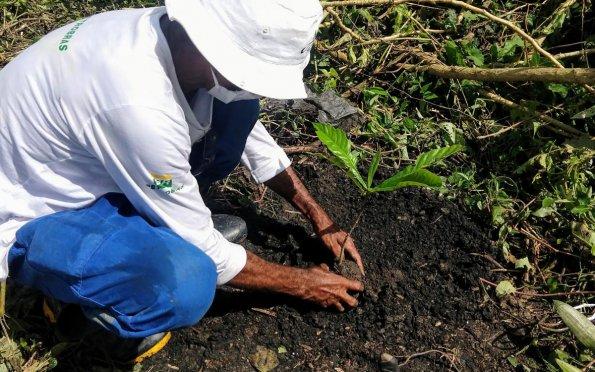 Projeto Azaharrecupera 12hectares de Mata Atlântica e planta mais de 10 mil mudas