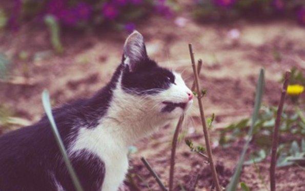 Alergia em pets durante a primavera exige atenção dos tutores