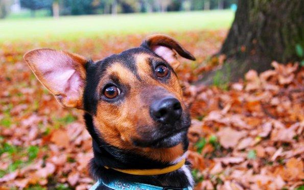Limpeza e hidratação das orelhas auxiliam a prevenção da otite em pets
