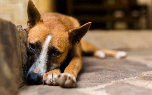 Saiba como identificar e denunciar crime de maus-tratos contra animais
