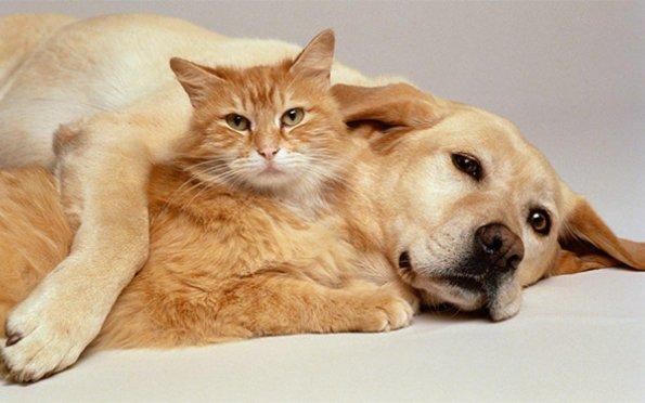 Os animais podem contrair ou transmitir o novo coronavírus?