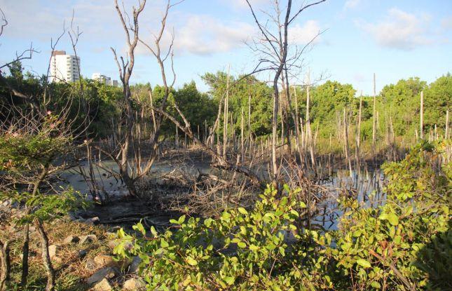 Sergipe volta a registrar aumento do desmatamento de áreas de Mata Atlântica