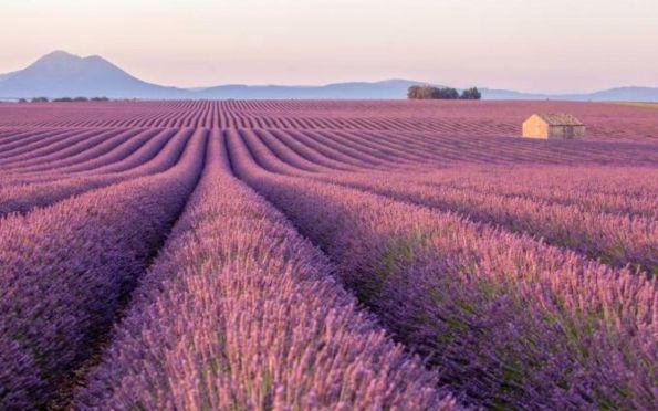 Passos Pelo Mundo: Provence, uma viagem dos sonhos pelo sul da França