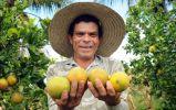 Governo paga 1ª parcela do Mão Amiga a trabalhadores da colheita da laranja