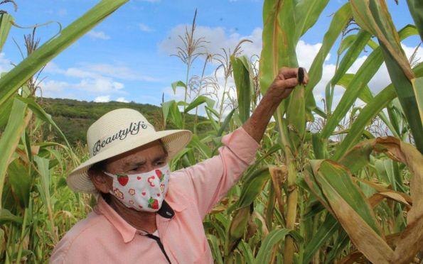 Seagri e BNB anunciam crédito para agricultores no plantio de milho crioulo