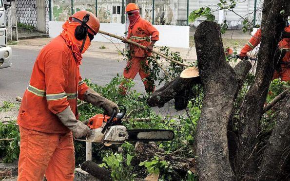 Defesa Civil de Aracaju atende ocorrências ocasionadas pelo vento forte