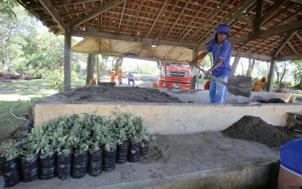Horto Municipal produz plantas para arborização de Aracaju