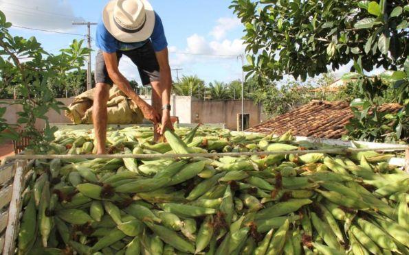 Sergipe segue como 4º maior produtor de milho do Nordeste, aponta IBGE
