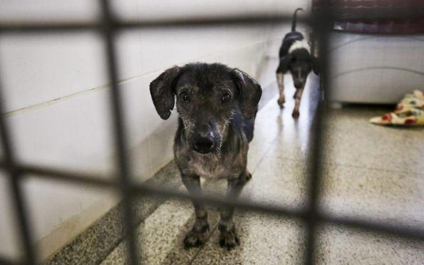 Lei que proíbe sacrifício de cães e gatos saudáveis por órgãos públicos é sancionada