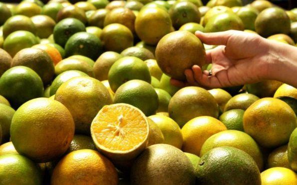 Biocarvão do bagaço da laranja pode ser usado para tratamento de água
