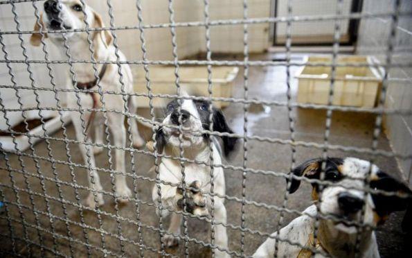 Adoção de animais domésticos é opção em meio ao isolamento social