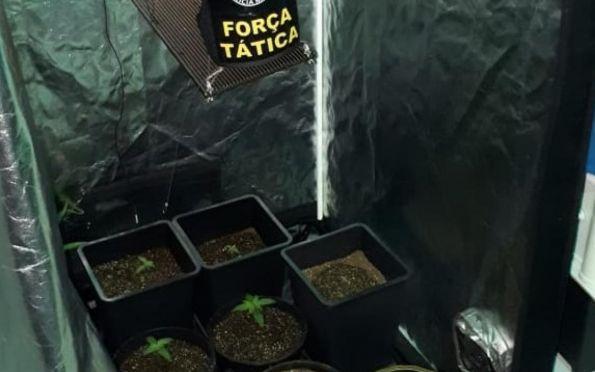 PM flagra cultivo ilegal de maconha dentro de residência no Santa Lúcia