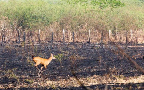 Engajamento da população é vital para evitar incêndio na natureza